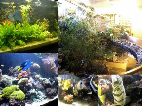 Visite aux membres du Cercle Aquaterrariophile Bailleulois