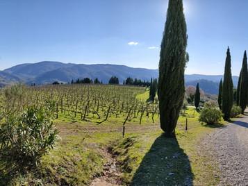Anello San Polo, Monte Muro, Fontesanta, Poggio Firenze