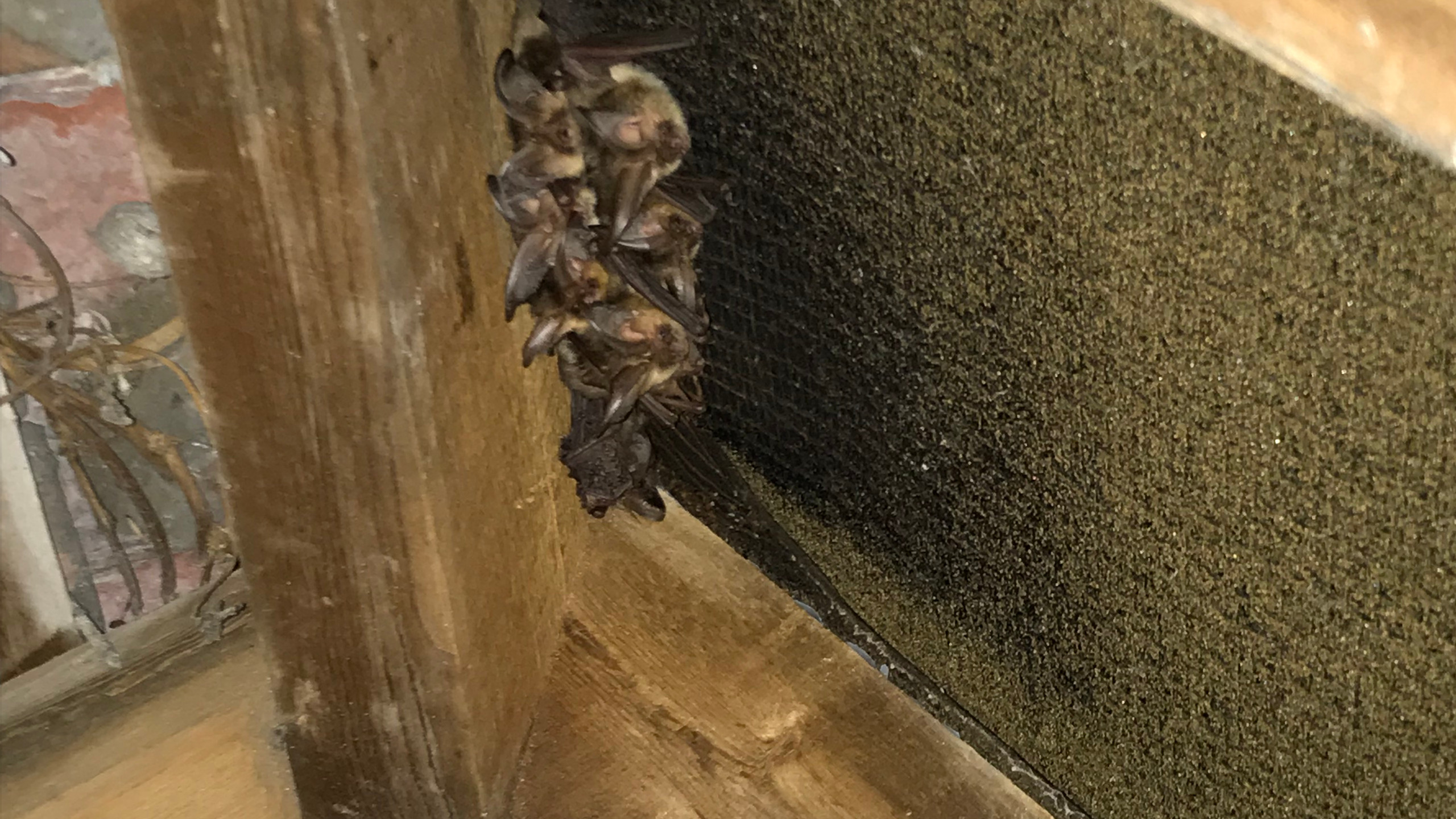 Preliminary Inspection for Bats