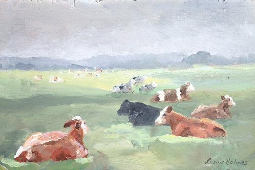 Cornish Cattle