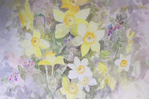 Daffodils and Narcissi