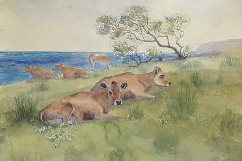 Roskilly Cattle