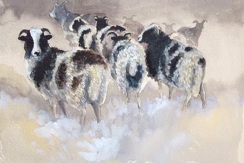 Jacob Sheep 1
