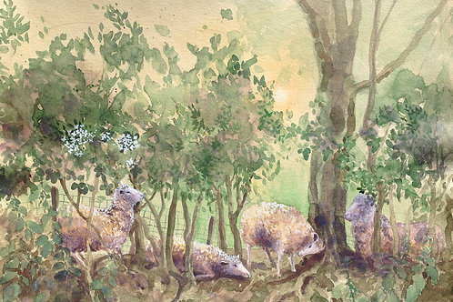The Hawthorne Hedge