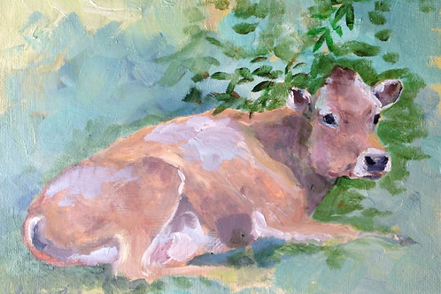Study Jersey Cow
