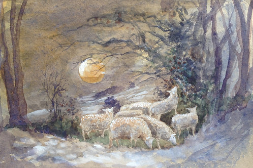 Moonlight Sheep