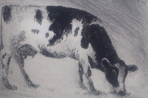 Cattle Etchings