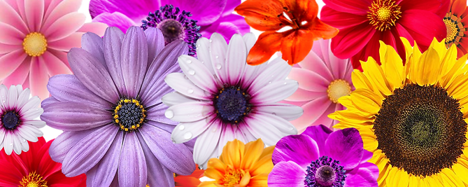 Flower%20page_edited.png