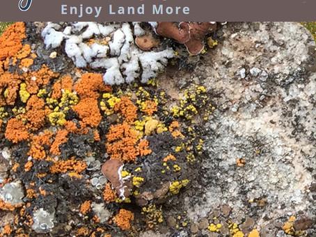 Liken' Lichen