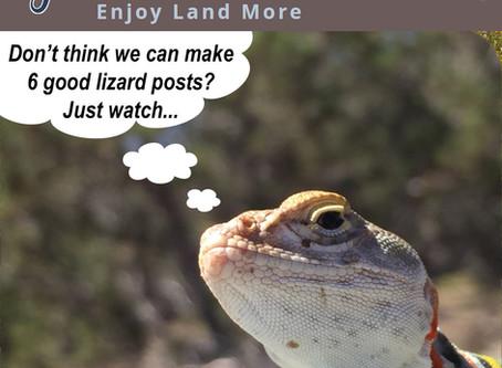LIZARDS! (The LIZARD Miniseries)