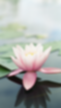 Pink-Lotus-Flower.png