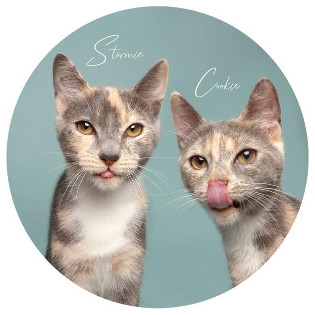 Cookie&Stormie7.jpg