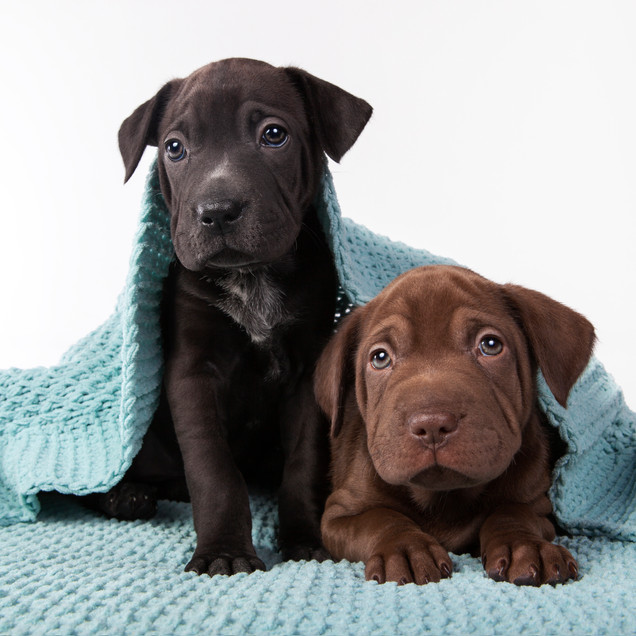 front page pups.jpg