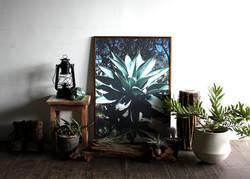 Botanico Art Prints