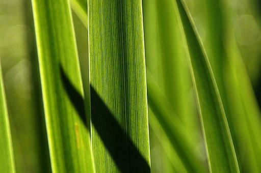 grass-3539764__340.jpg