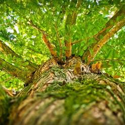 tree-1750784__340.jpg