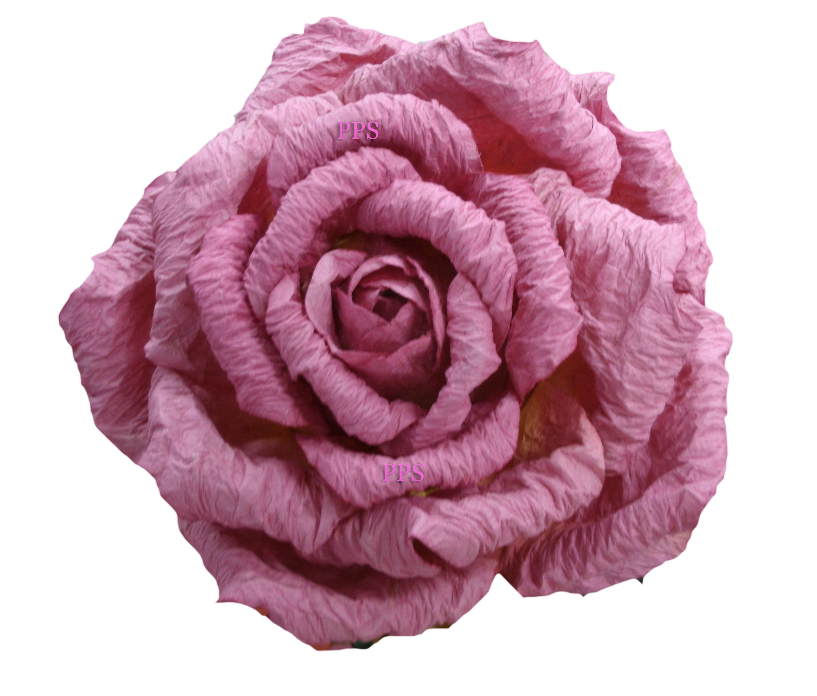 Giant Rose-40