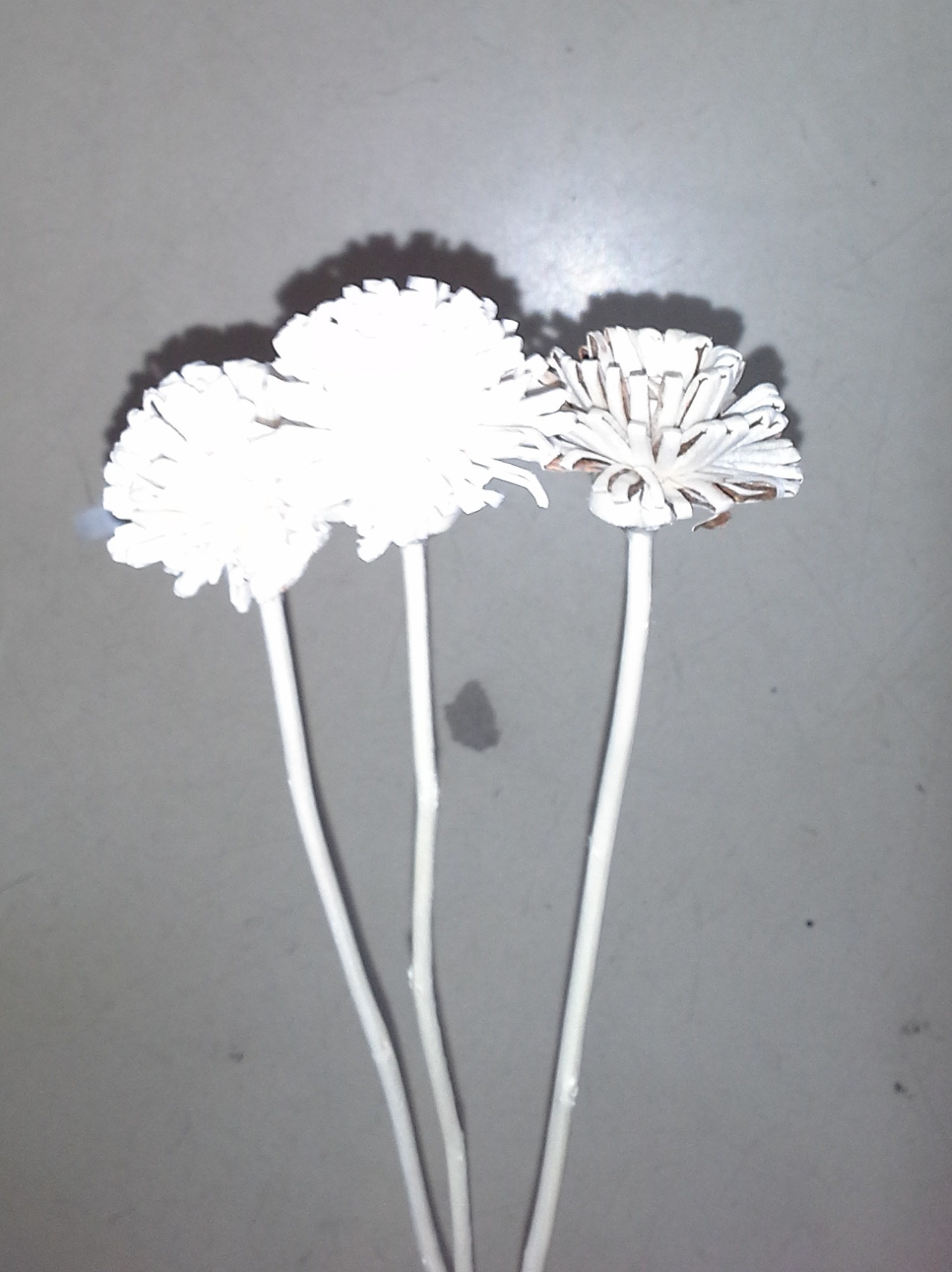 Sola flower with branch