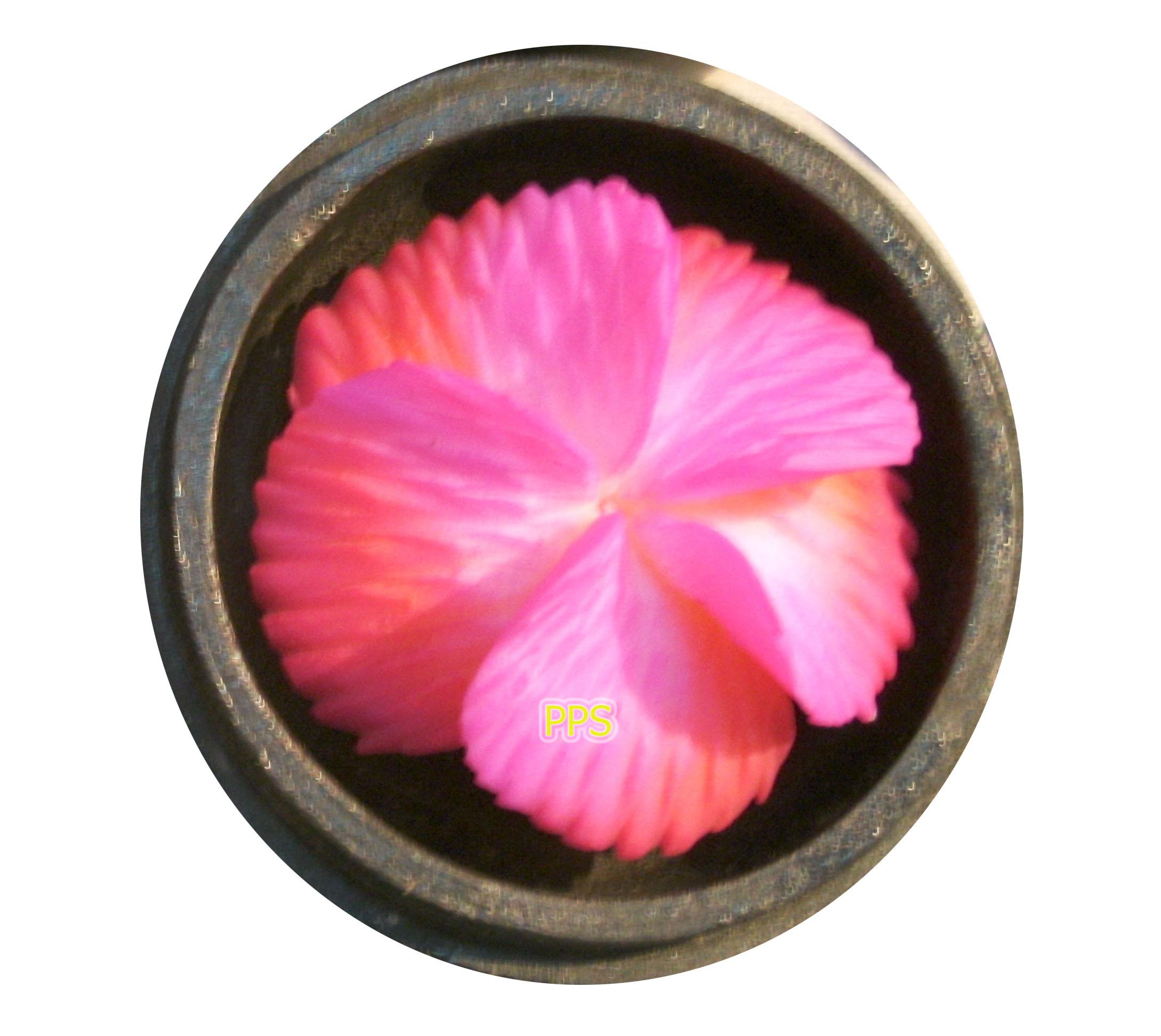 Soap Flower C1043-1