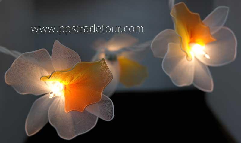 Nylon orchid light_0877-1