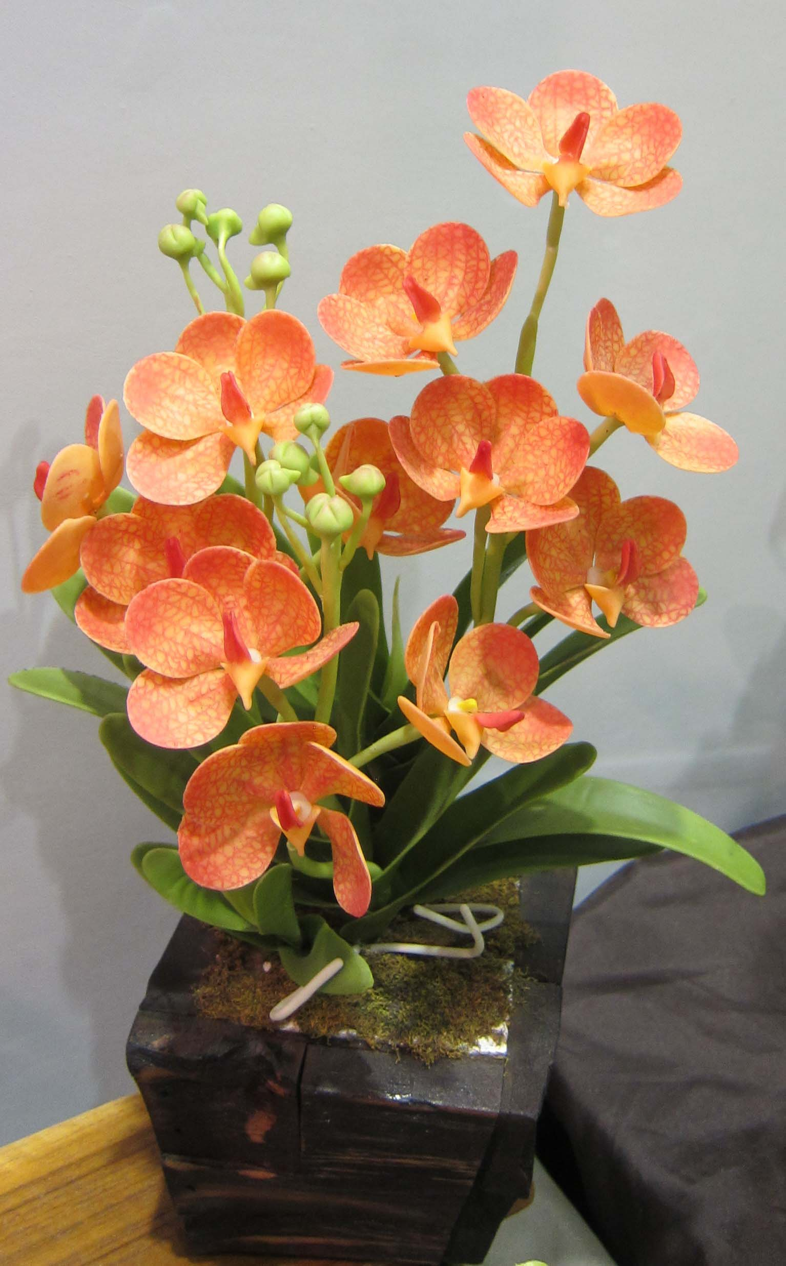 Orchid Clay-4