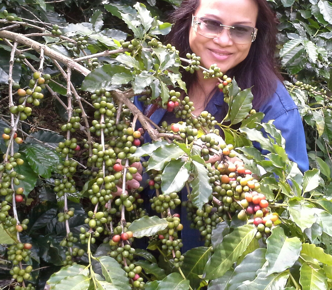 Patty in coffee plantation