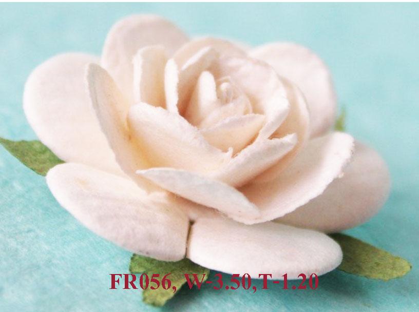 PS-RoseFR056