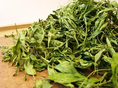 Dried Stevia Tea