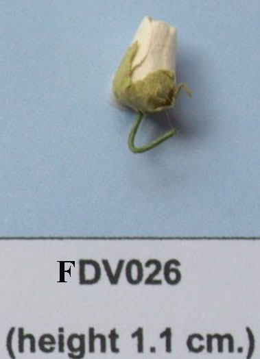 Sample Paper Flower-FDV026