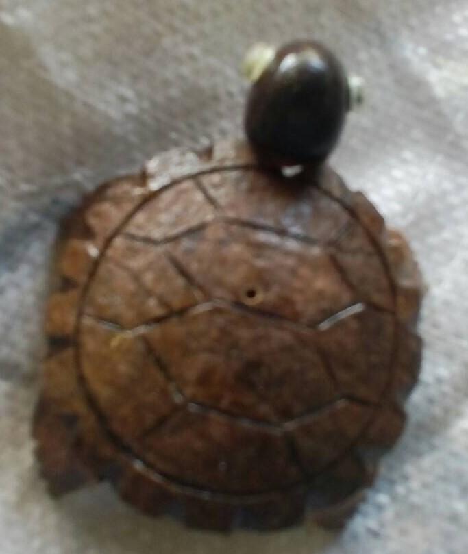 Turtle536