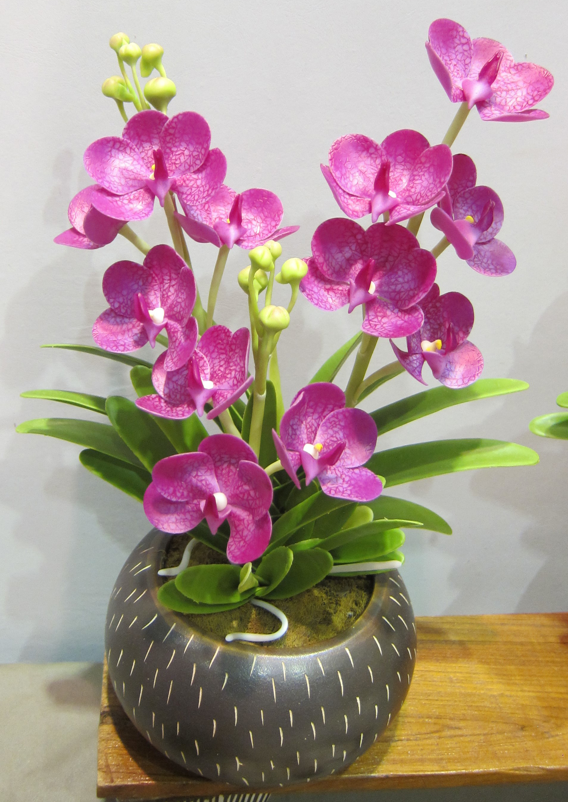 Orchid_3648-1