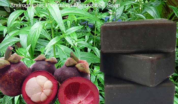 Andrographis Paniculata Mangosteen Soap