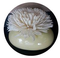 Sola flower + Aroma pot-7
