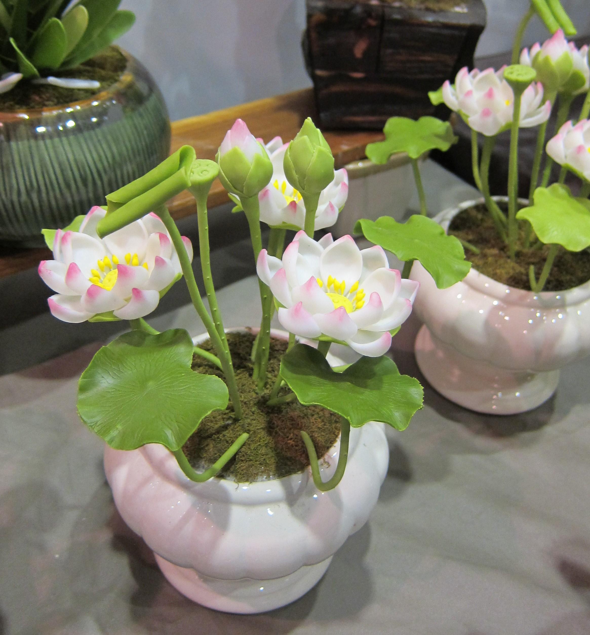 Lotus_3643