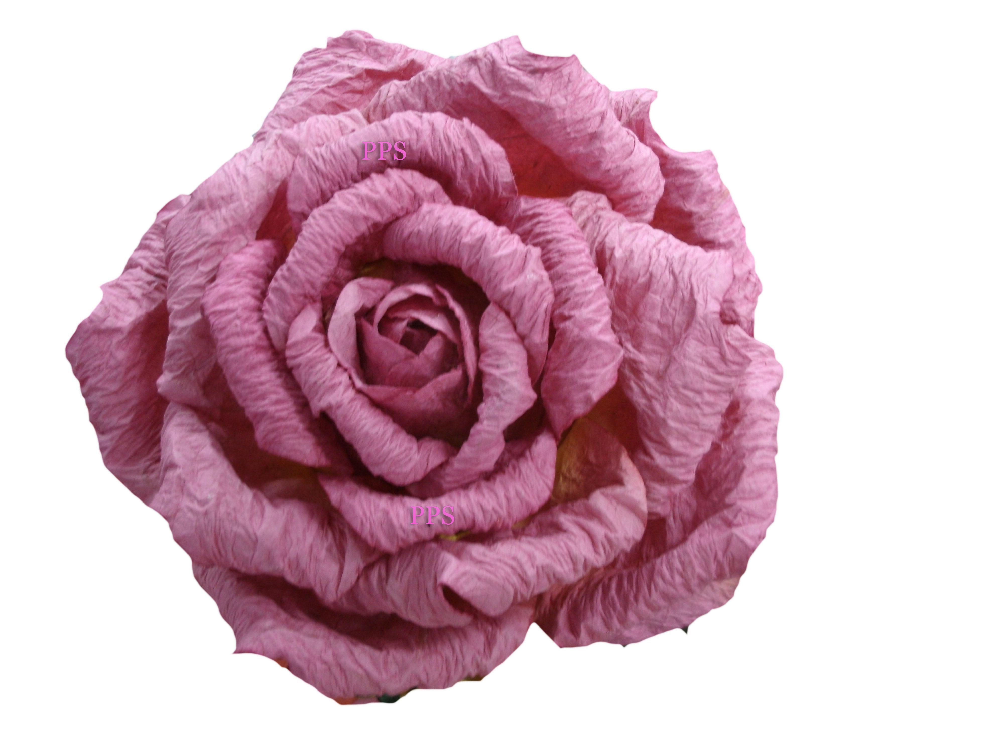pinkrose-35