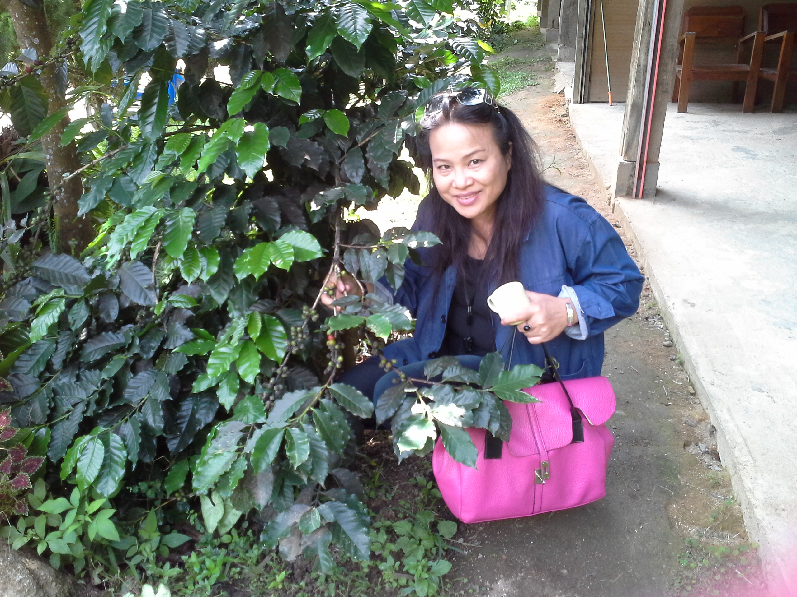 Visited coffee plantation