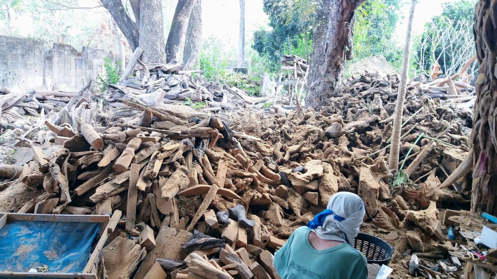 Driftwood017