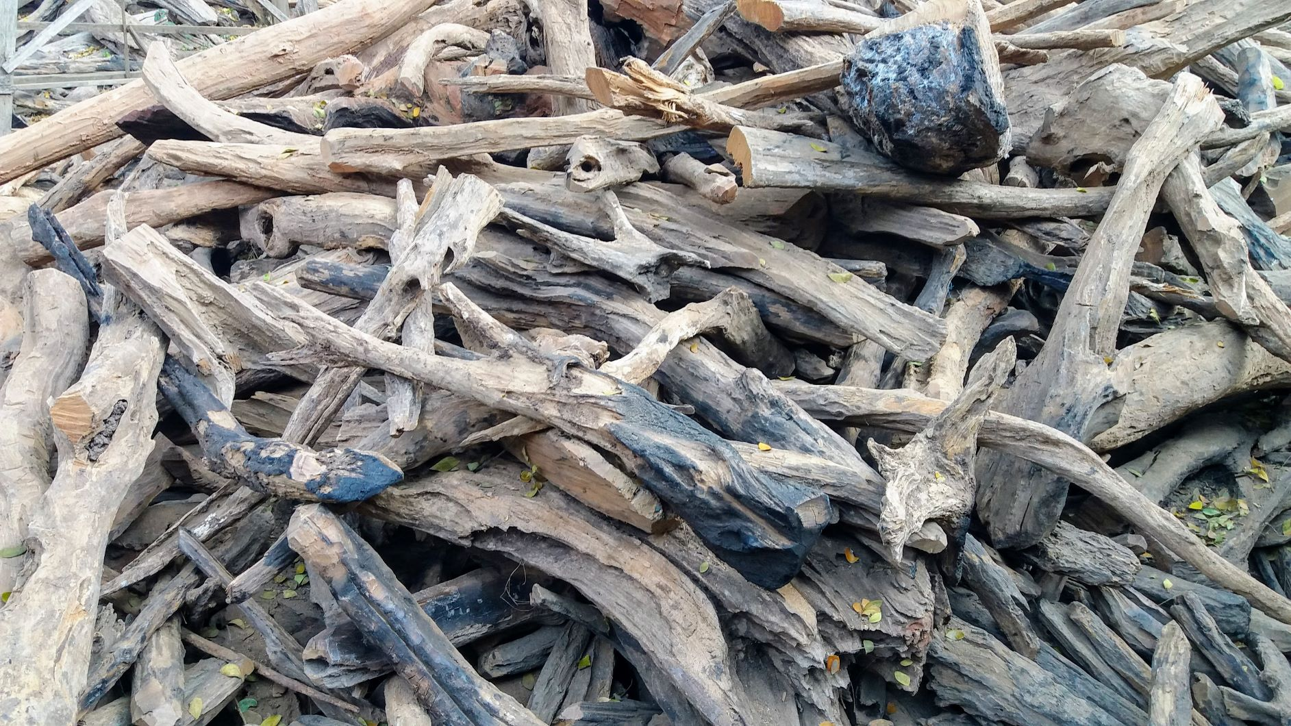 Driftwood111