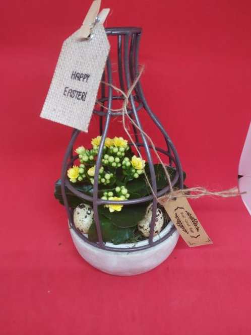 Planty w klatce