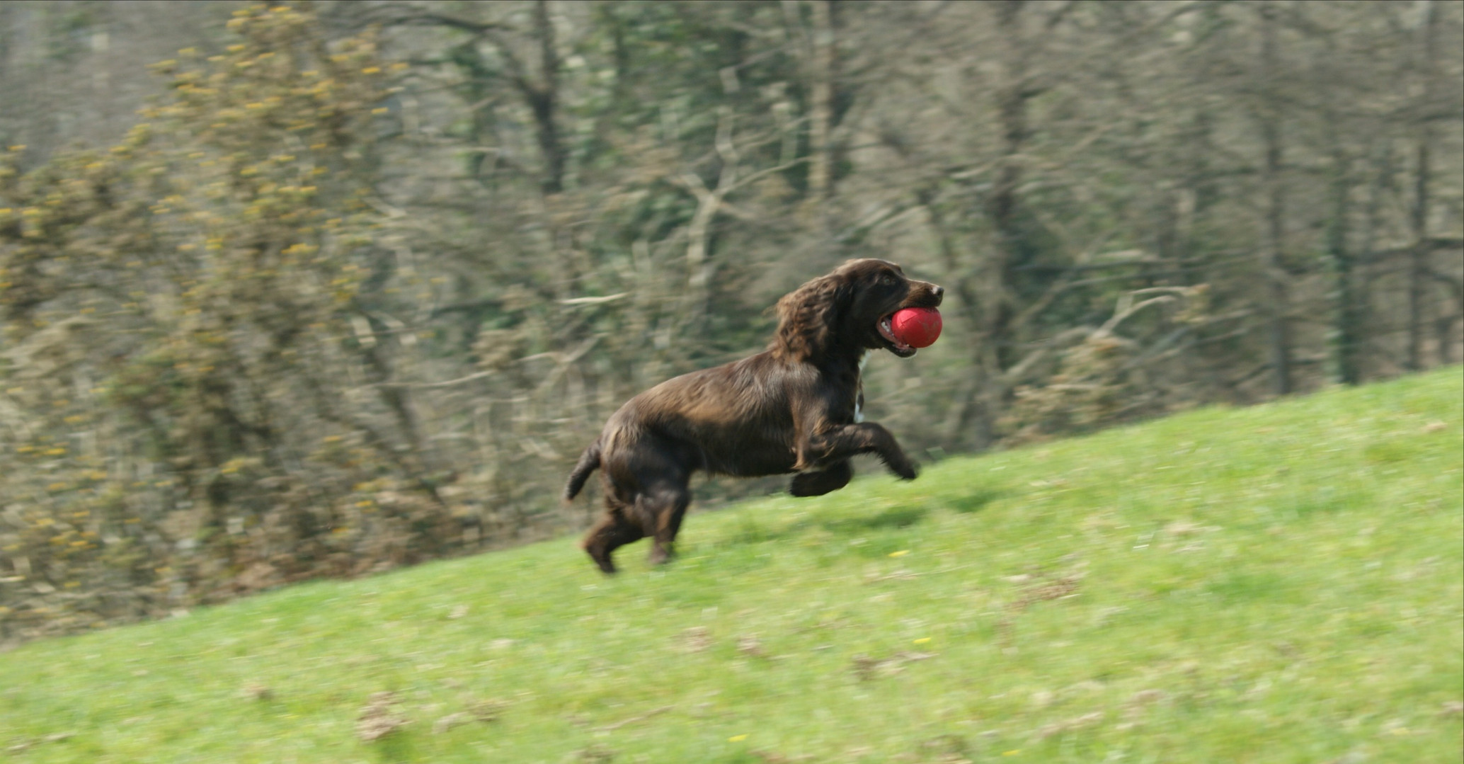 Westwood Gun Dog Training 24.03_edited.j