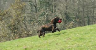 Westwood Gun Dog Training 24.03_edited.j