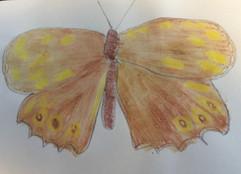 04.16.2020 Butterfly.jpg