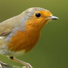 Homeschool Garden Club - Robin