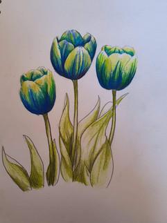 04.02.2020 Tulips 5.jpg