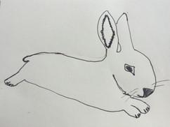 04.06.2020 Rabbit.JPG