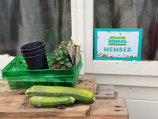 Homeschool Garden Club - Not everything goes to plan in a garden!