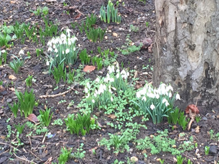 Garden Club - In the Hunt for Seeds and Snowdrops