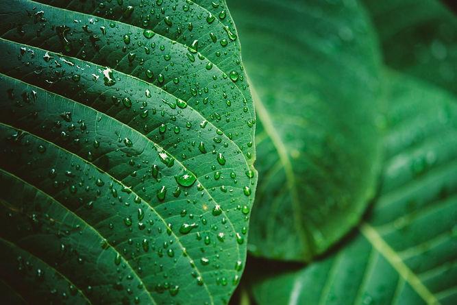 rain-water-green-leaf-macro_edited.jpg