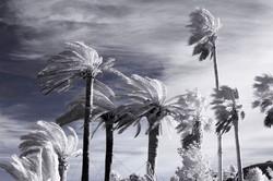 palm1b