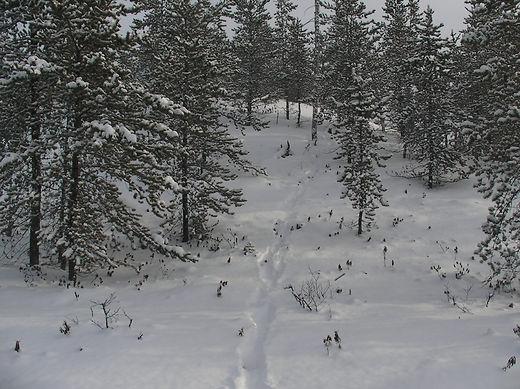 Wolf track.jpg